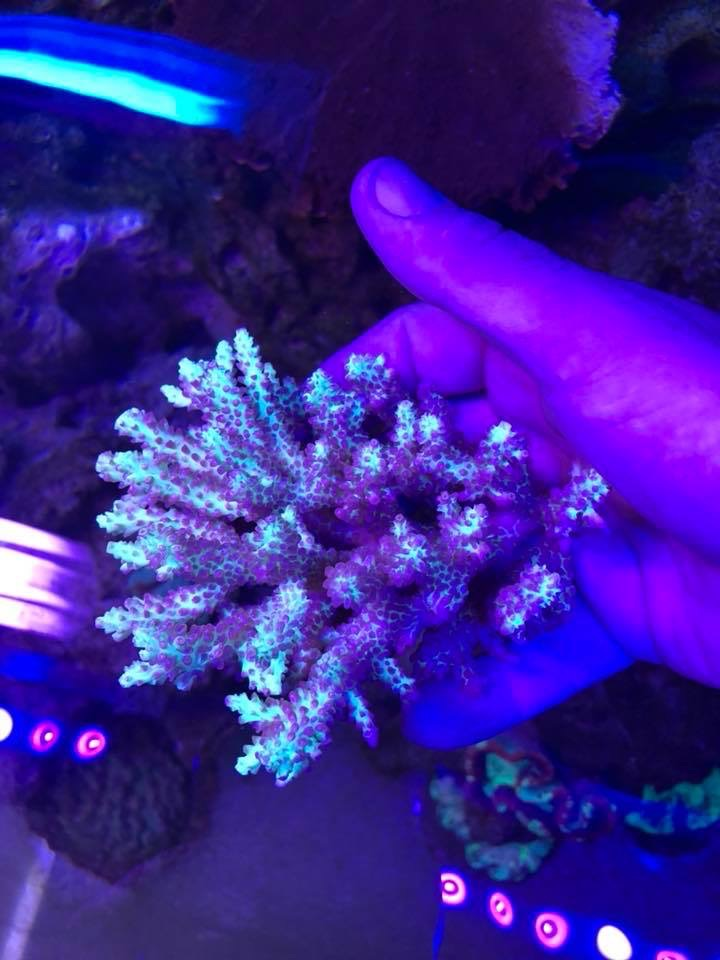 uv_coral_LED_bar_lights