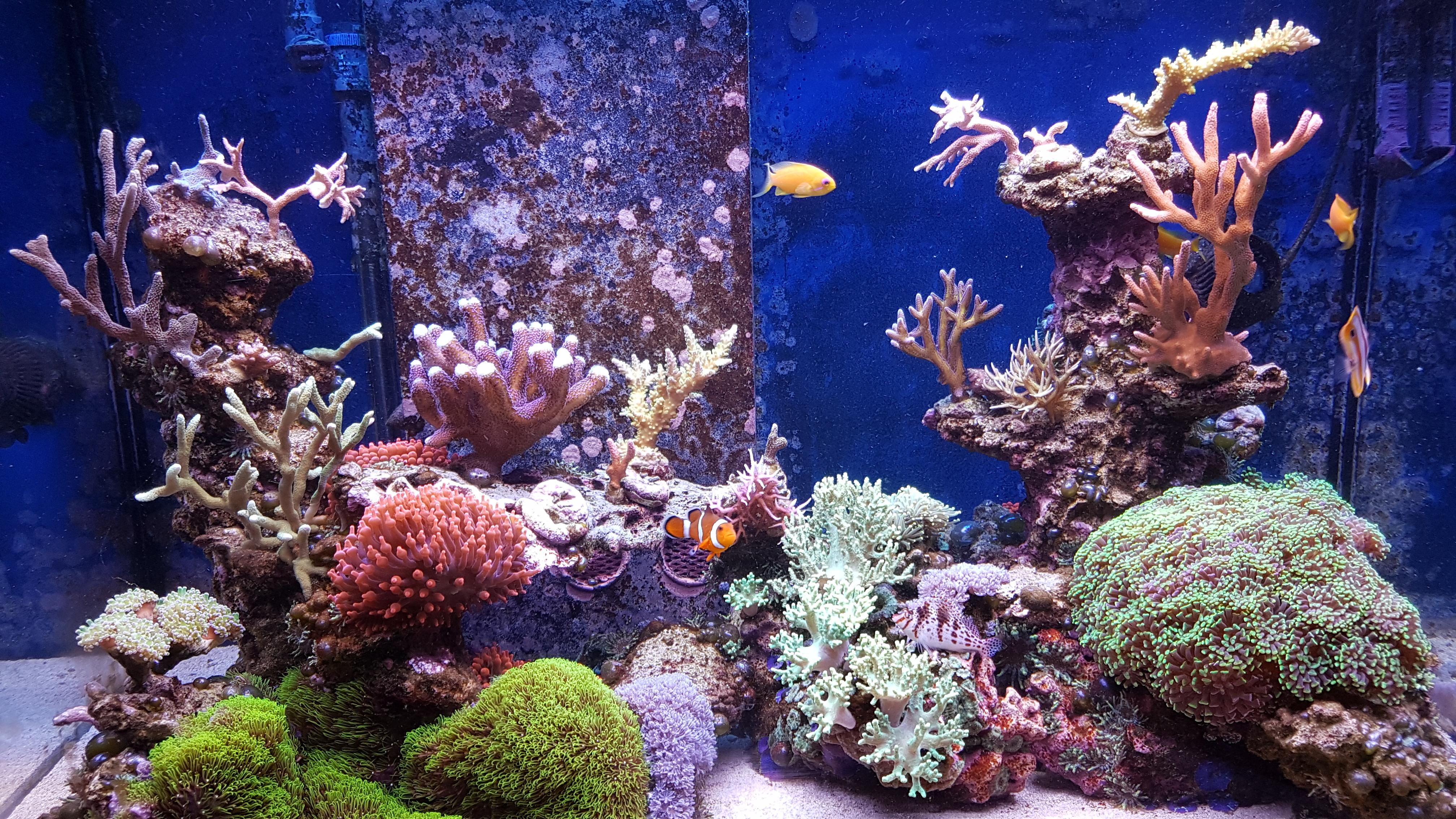 Plafoniera Led Acquario Dolce 150 Cm : O  bar led lighting u orphek aquarium