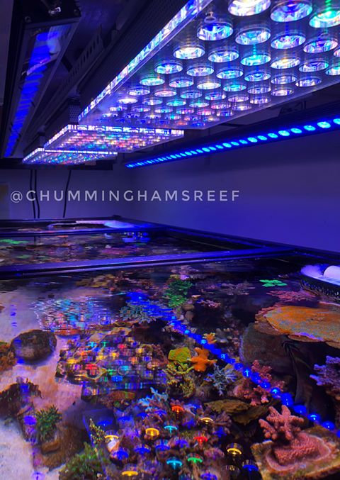 Best LED Lights for Reef Tank 2018-2019 Review