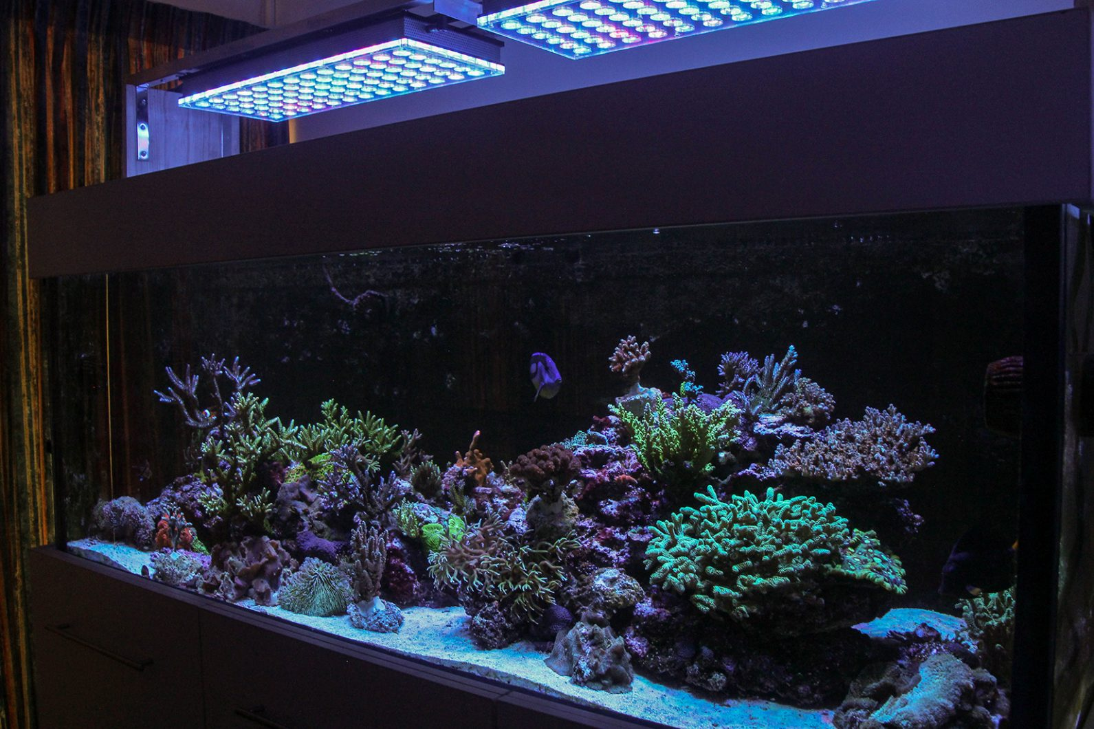 Full tank shot from right- orphek-atlantik