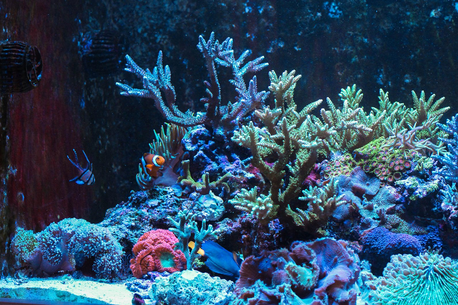 Left islands sps corals LED light