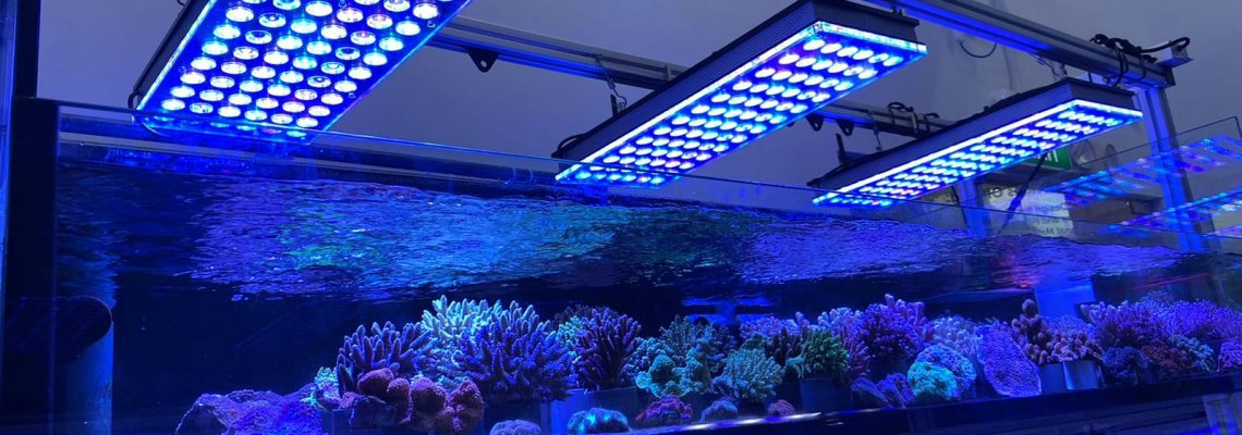 Light Requirements of a Coral -aquarium