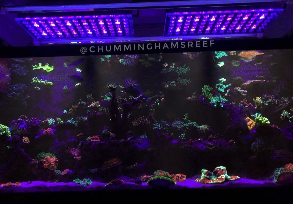 Atap reef-aquarium -violet-orphek LED