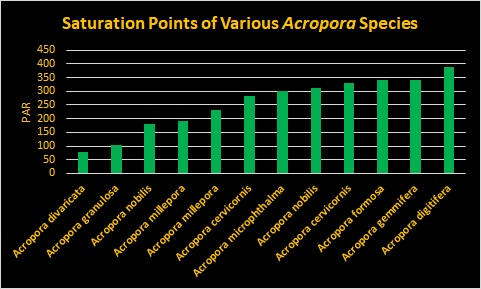 Saturation Points of Acropora species