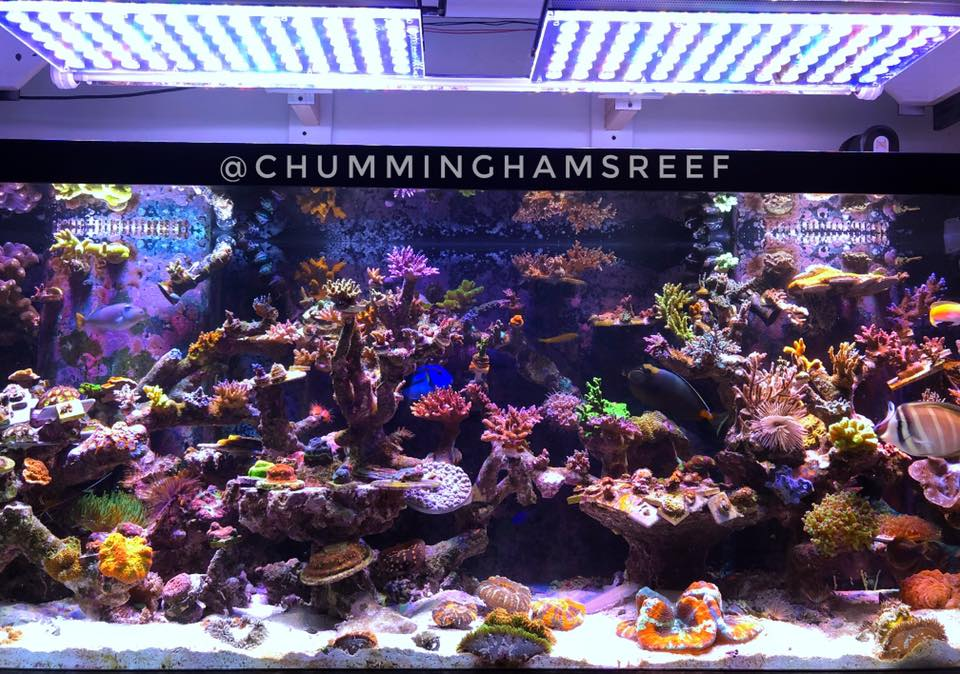 full-day-light-reef-aquarium-orphek-light
