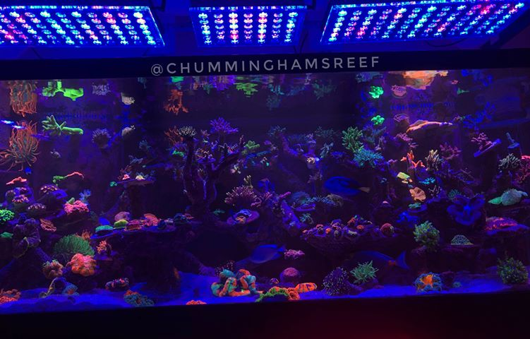 orphek-led-aquarium-lighting