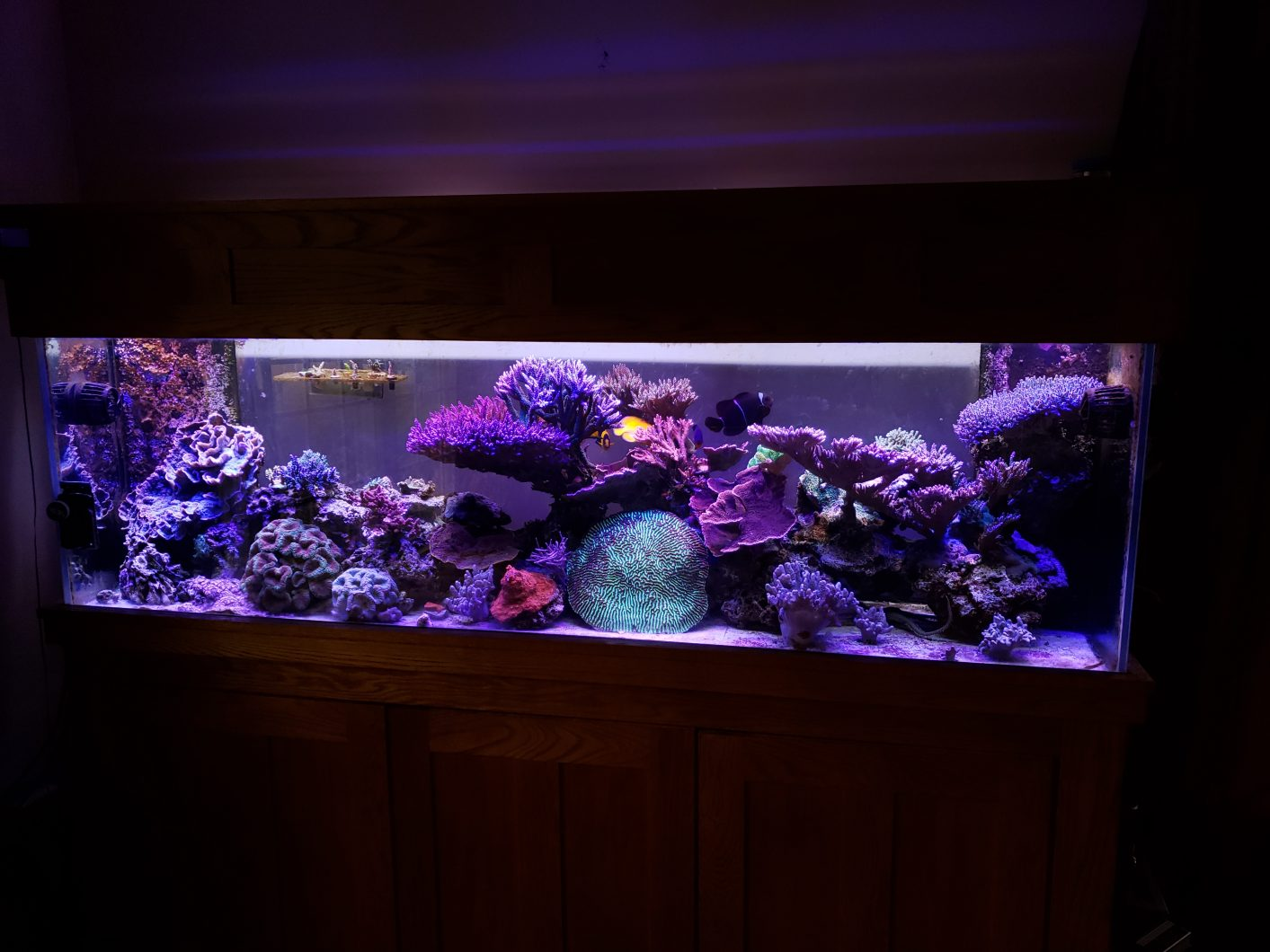 orphek-or90-bar-led-over-6-foot-wide-135G-sps-dominated-reef