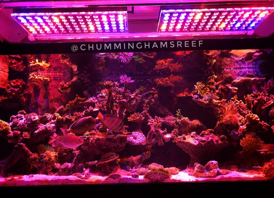 reef-aquarium-red-channel -orphek atlantik