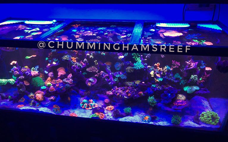 reef-tank-led-lights