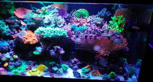 the_best_reef_aquarium_LED_light