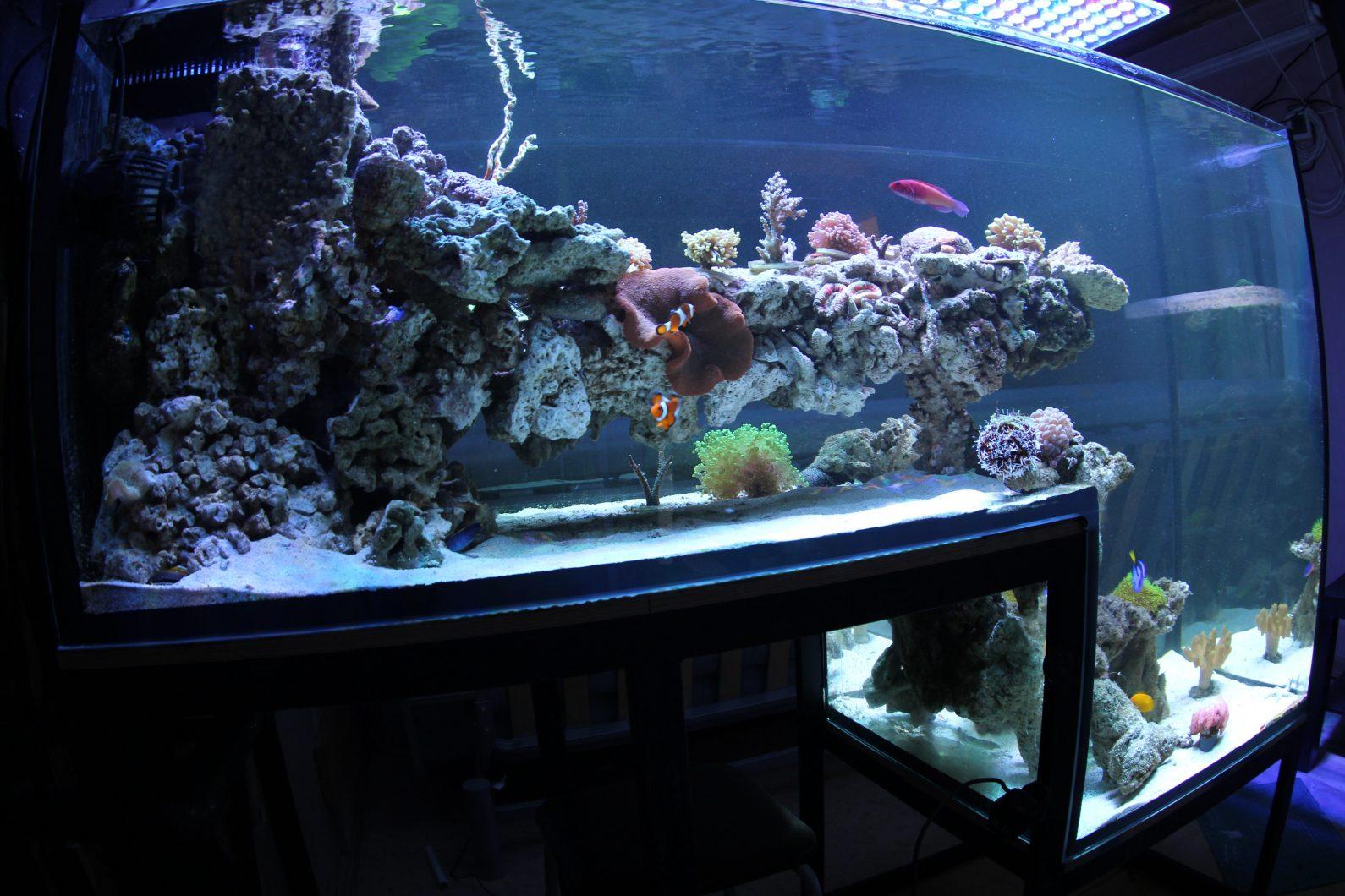 Dropoff рифов аквариума