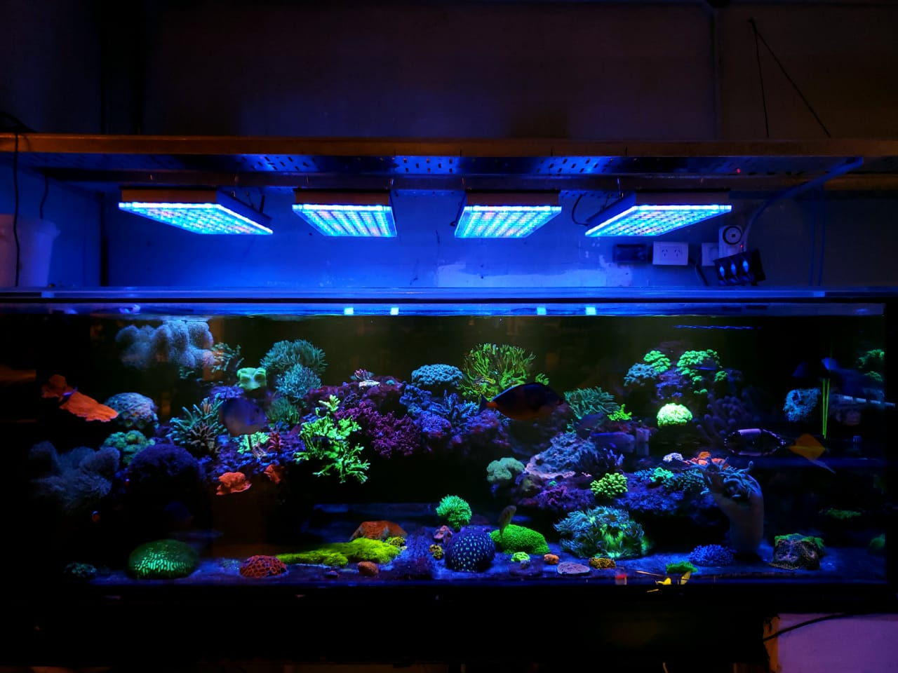 paling apik-reef-aquarium-LED-lighting-orphek