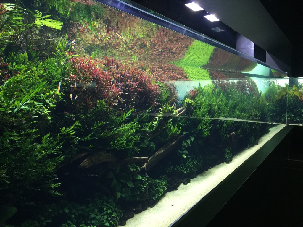 Aquascape種植水族館