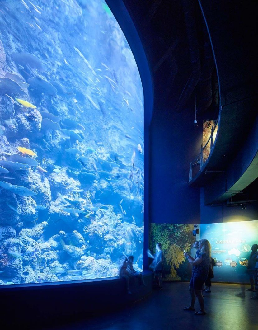 ایمیزوناس 500 آسٹریلیا میں کیئر ایکویریم میں بڑے گہری ایکویریم کی روشنی میں