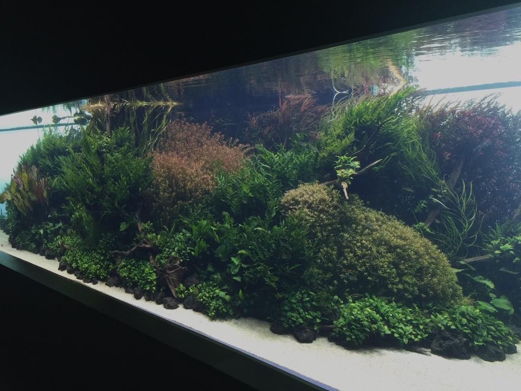 The Longest Aquascape Planted Aquarium In The World Orphek Led Light