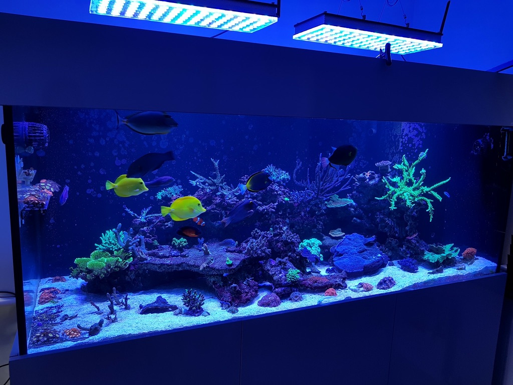 The Best-Reef-aquarium-LED-lights-2019-Orphek-100