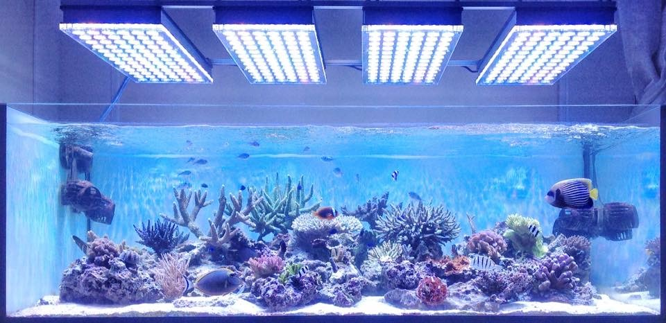 The-Best-Reef-acquario-LED-luci-2019-Orphek-104