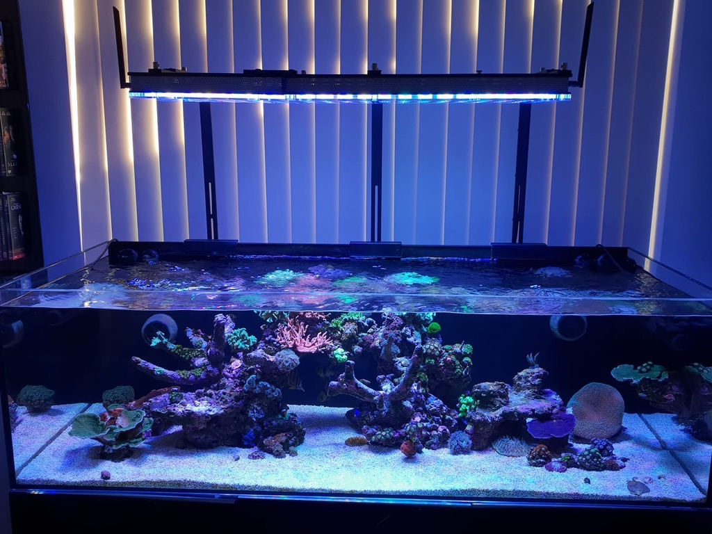 best reef aquarium LED lighting 2020