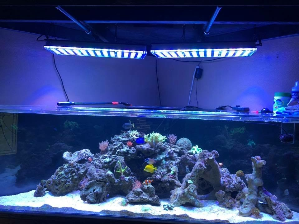 The-Best-Reef--aquarium LED-verlichting-2019-Orphek-117