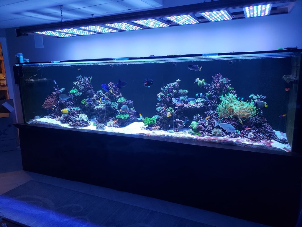 The-Best-Reef--aquarium LED-verlichting-2019-Orphek-119