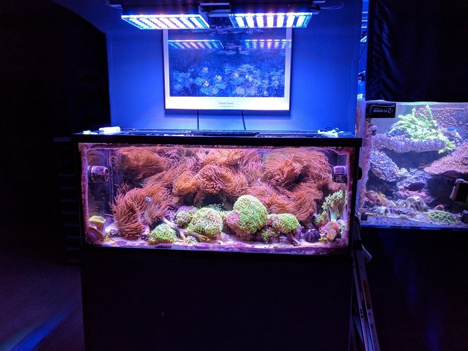 buy best LED lighting for reef aquariums