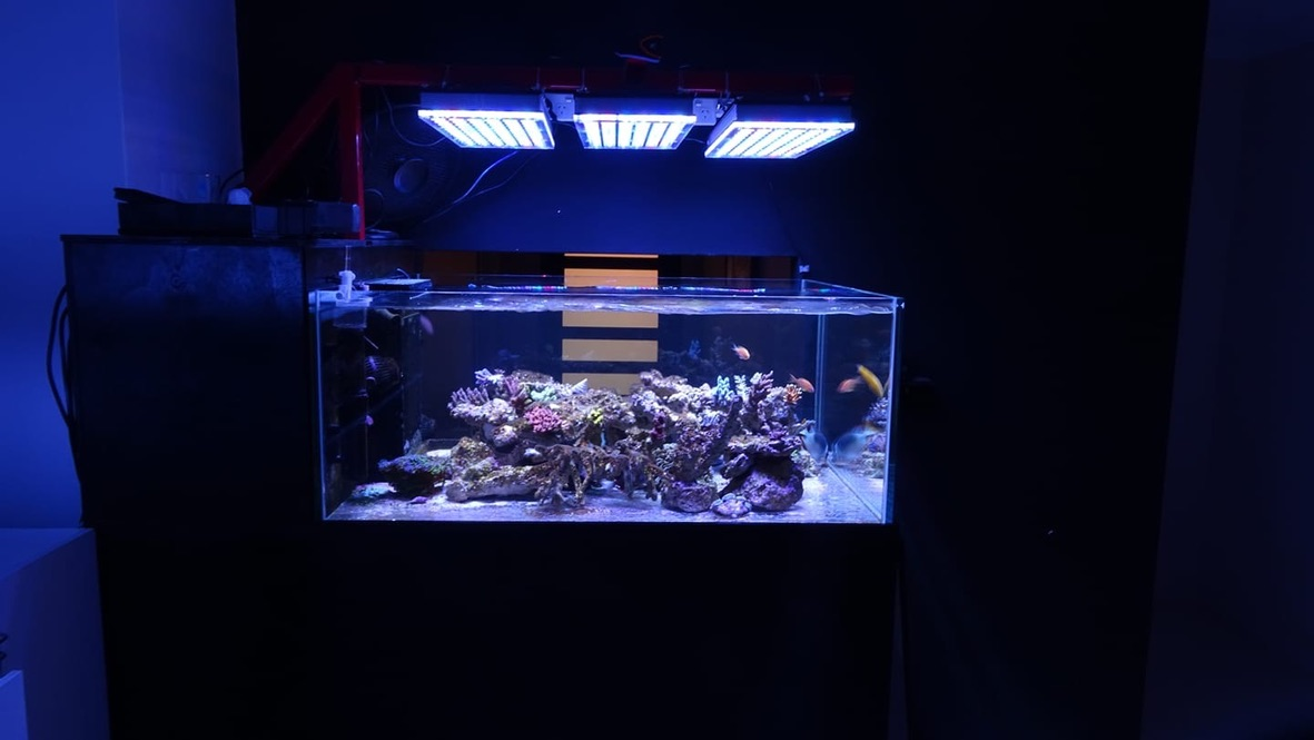 The-Best-Reef--aquarium LED-verlichting-2019-Orphek-130