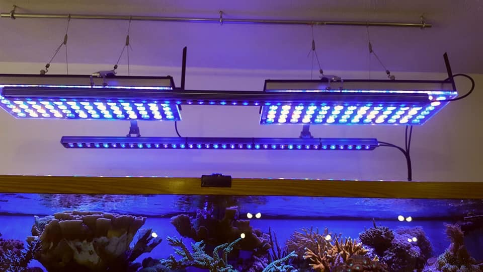 The-Best-Reef--aquarium LED-verlichting-2019-Orphek-131