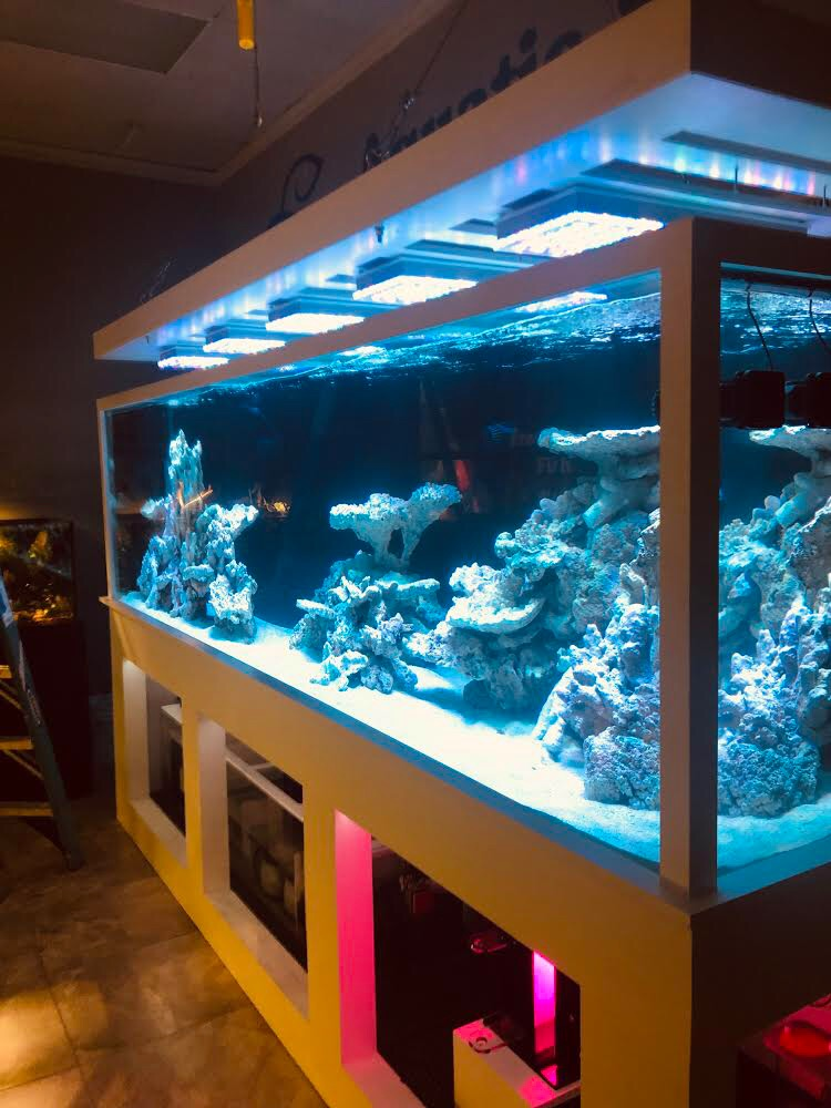 Luce LED Atlantik reef