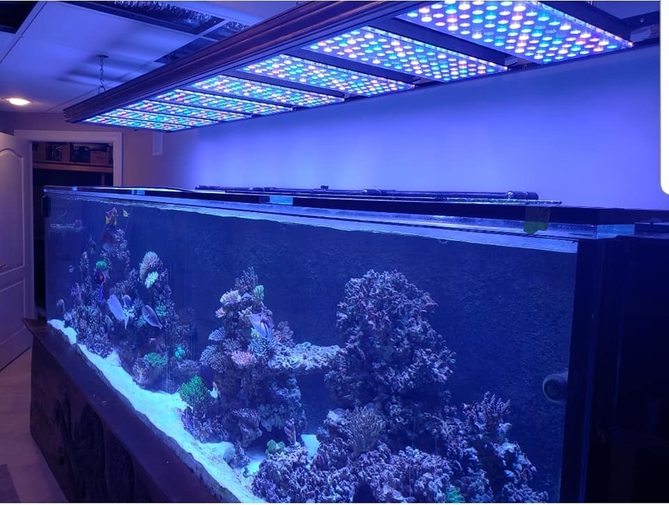 amazing reef led lights