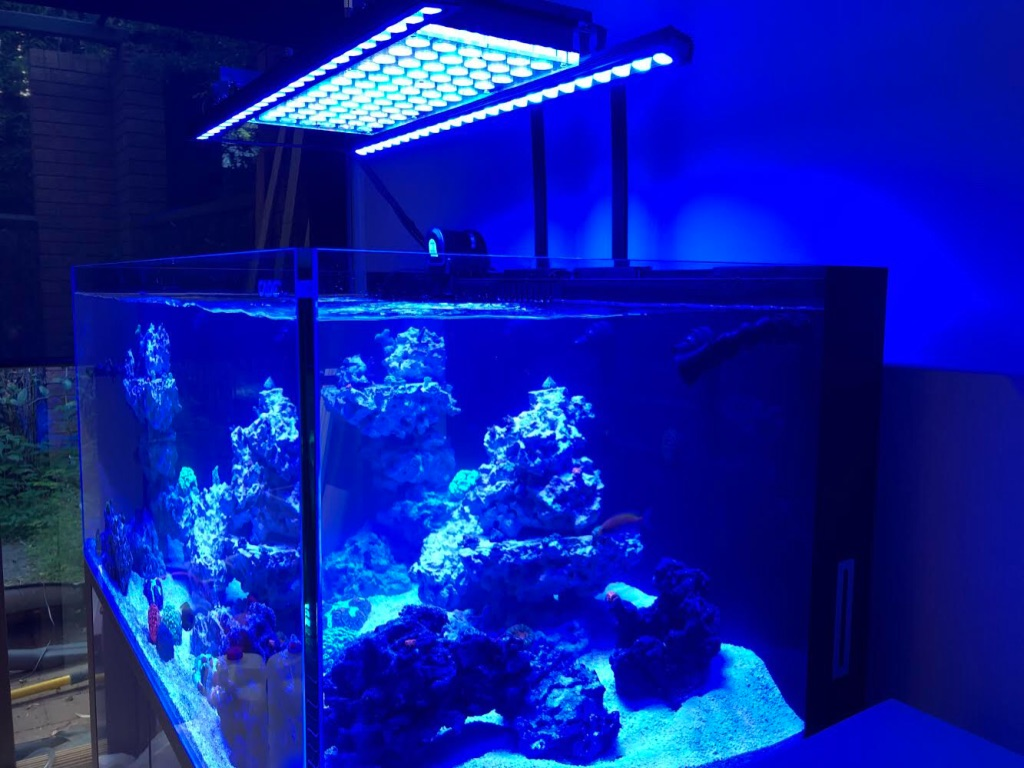 OR2 120 bleu plus barre led