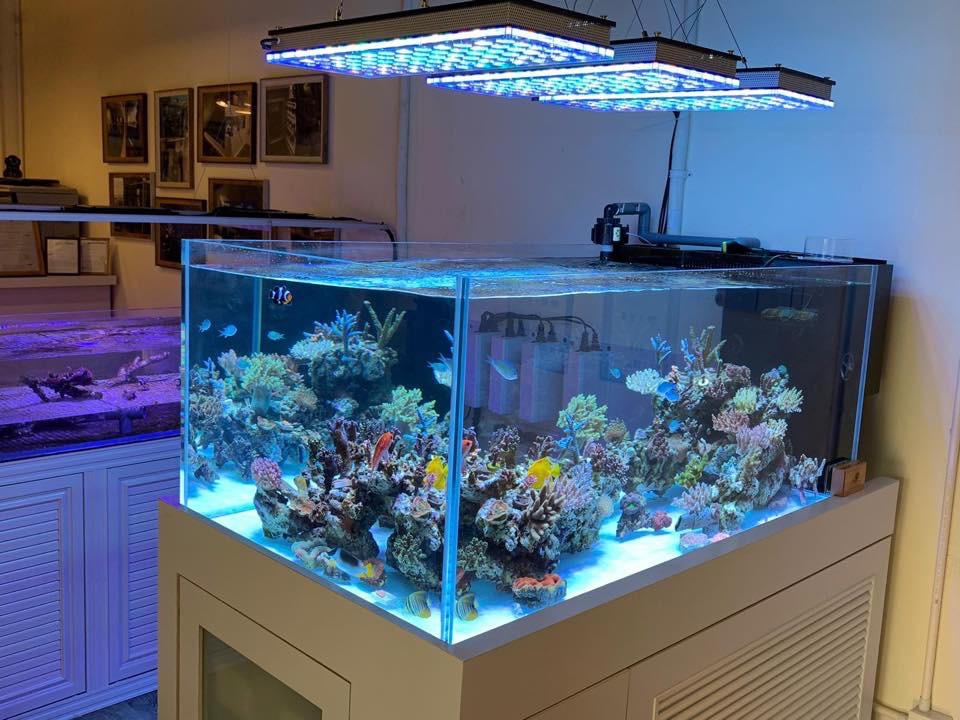 The-Best-Reef--aquarium LED-verlichting-2019-Orphek-157
