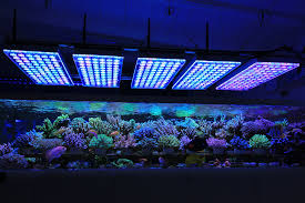 The-Best-Reef-Aquarium-LED-đèn-2019-Orphek-159