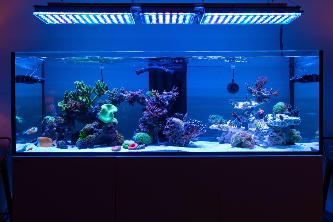 The-Best-Reef-akvarium-LED-lys-2019-Orphek-159
