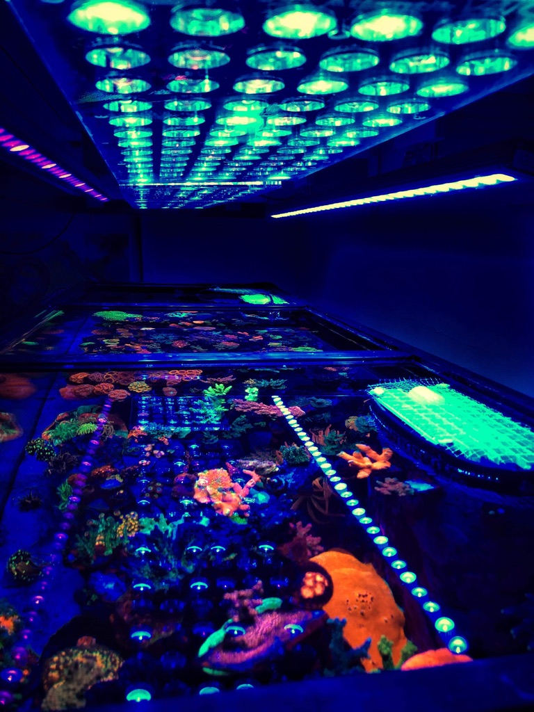 The-Best-Reef--aquarium LED-verlichting-2019-Orphek-168