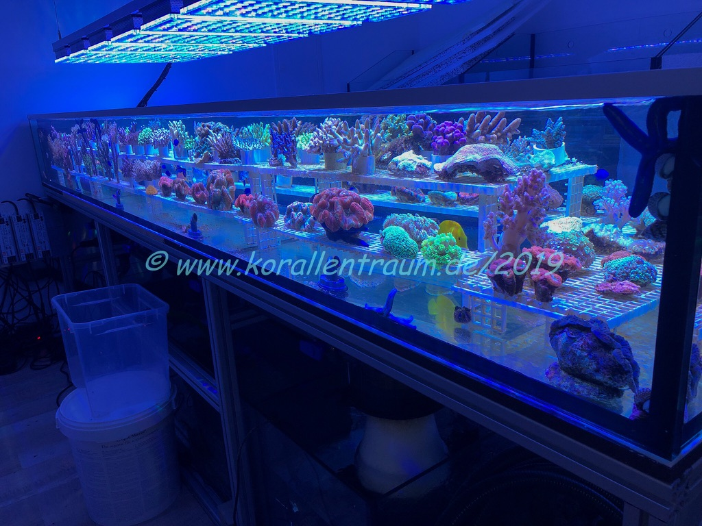 corals farm led lights