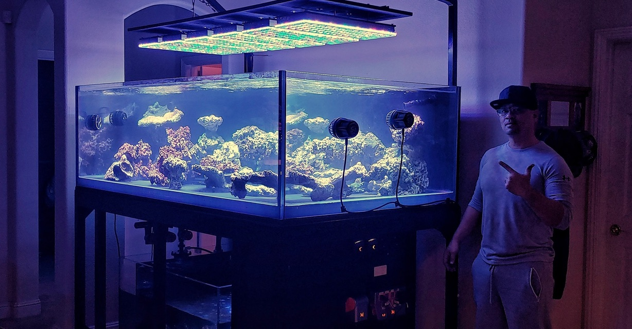 best reef aquarium lights