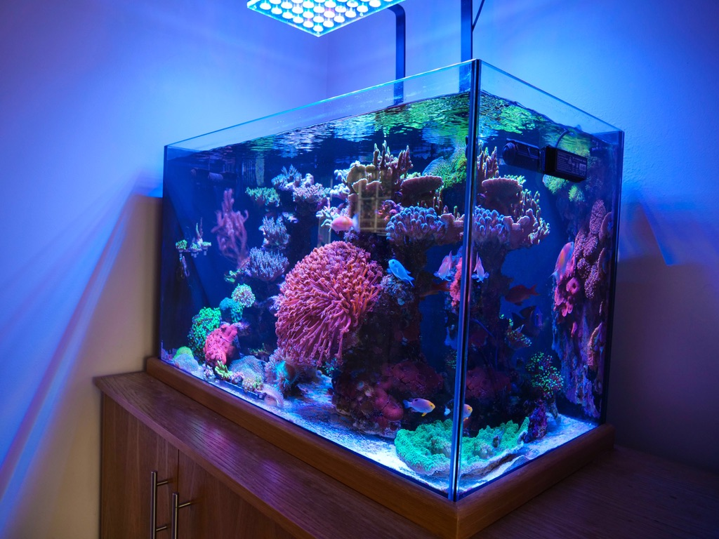 Lumières d'aquarium LED