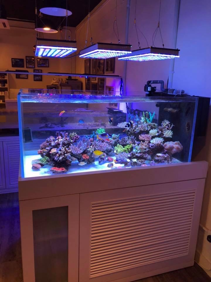 LED lighting reef aquarium