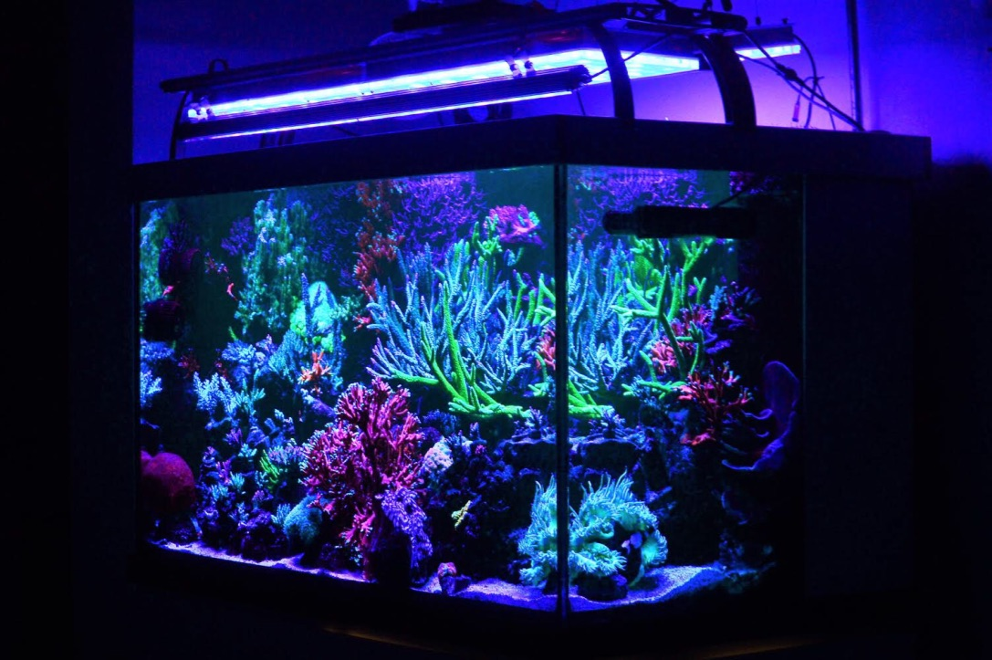 tuku lampu LED aquarium