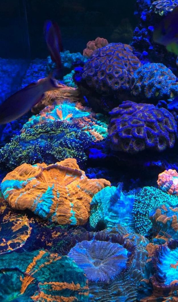 The-Best-Reef--aquarium LED-verlichting-2019-Orphek-3