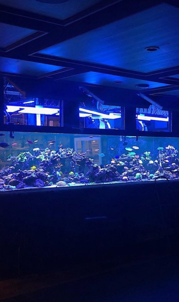 The-Best-Reef--aquarium LED-verlichting-2019-Orphek-4
