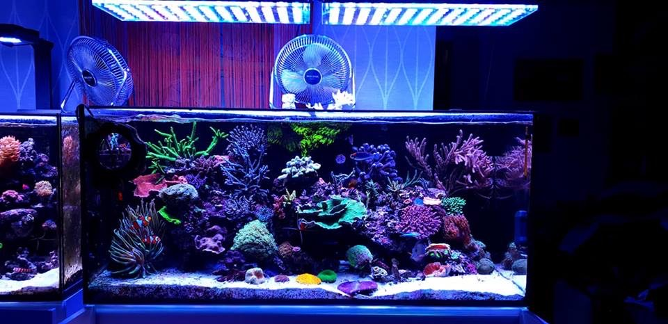 The-Best-Reef--aquarium LED-verlichting-2019-Orphek-47