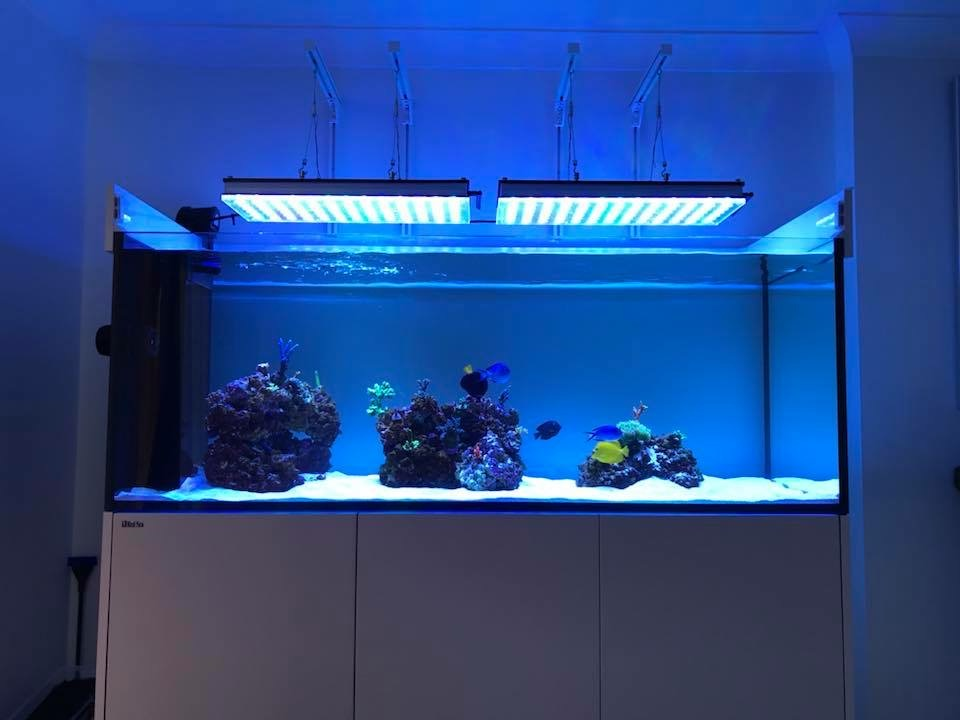 The-Best-Reef--aquarium LED-verlichting-2019-Orphek-63
