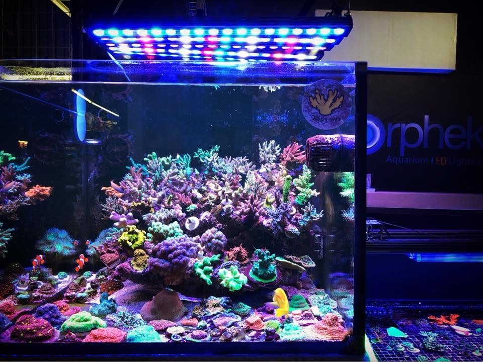 The-Best-Reef--aquarium LED-verlichting-2019-Orphek-69