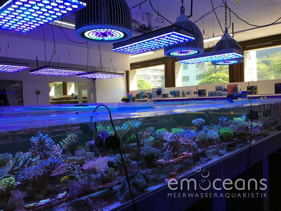 The-Best-Reef-acquario-LED-luci-2019-Orphek-96