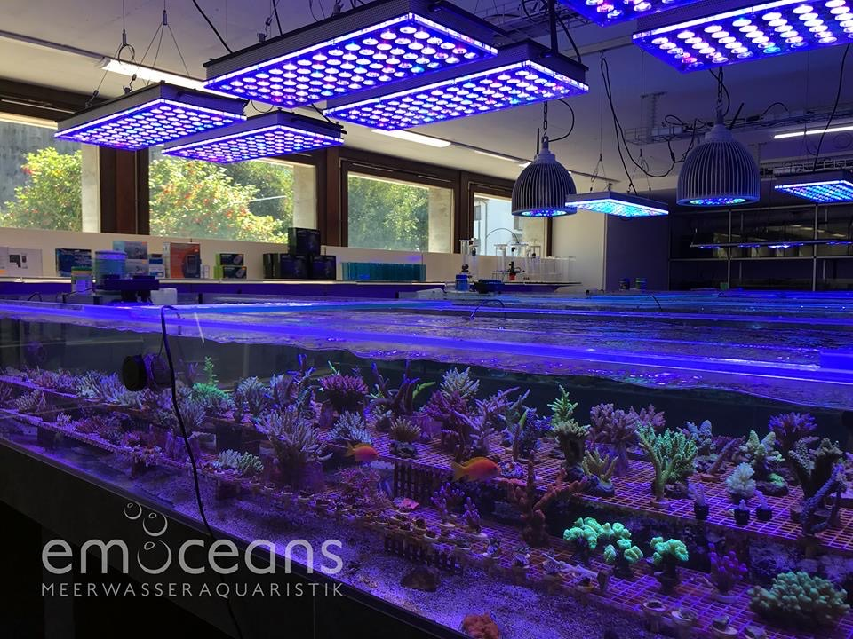 The-Best-Reef-acquario-LED-luci-2019-Orphek-97