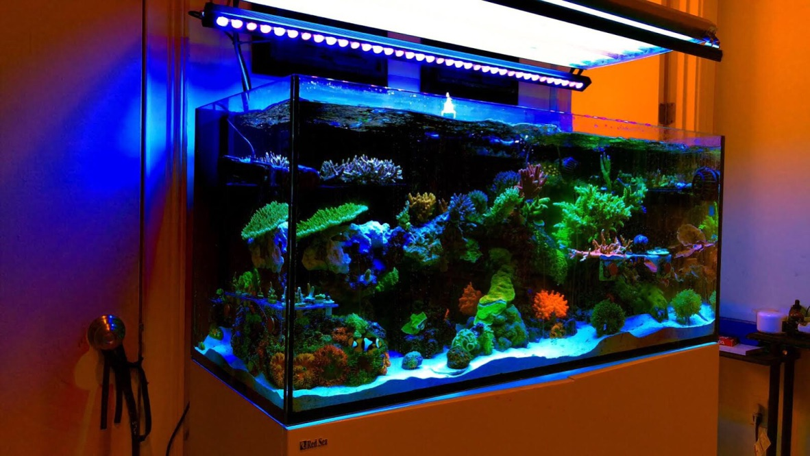 The-Best-Reef--aquarium LED-verlichting-2019-Orphek-99