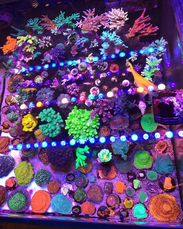 Best-Reef-Aquarium-LED-đèn-2020-Orphek