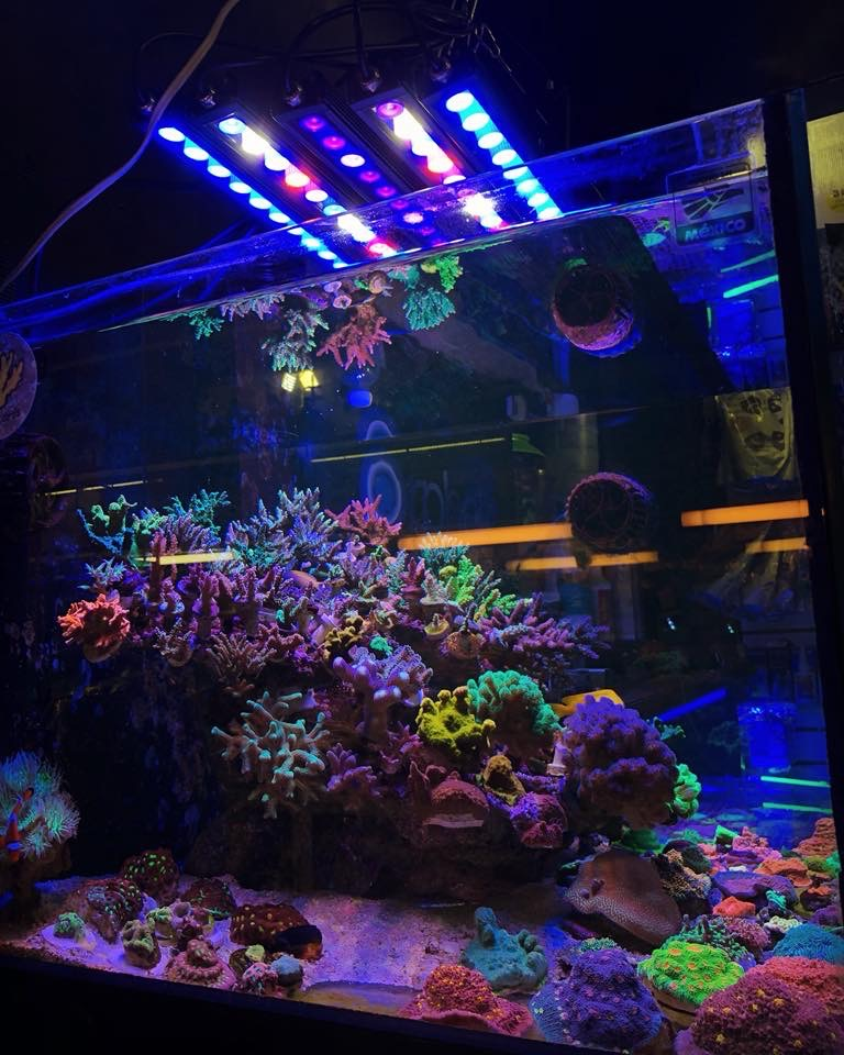 Best-Reef-aquarium-LED-lights-2020
