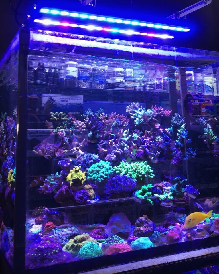 Bäst Reef-akvariet-strip-LED